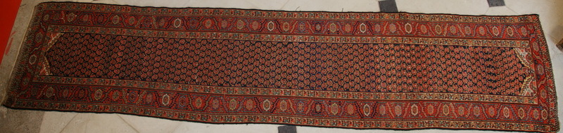 Carpet gallery debut XX