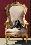 Throne chair, Venice circa 1850